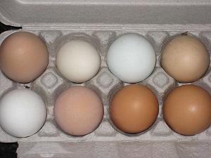 Яйца полезны при сахарном диабете