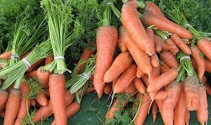 Морковь полезна при сахарном диабете