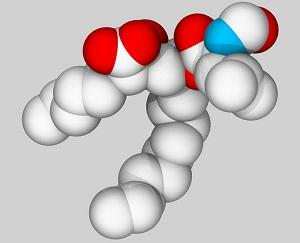 Что значит, когда повышены триглицериды в крови