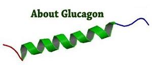 Глюкагон это гормон, являющийся антагонистом инсулину