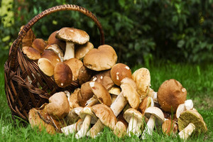 Можно ли грибы при панкреатите