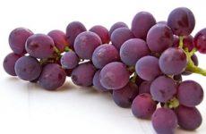Виноград при панкреатите